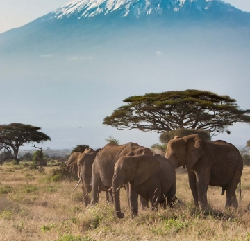 4 Days Kenya Tour - Amboseli National Park