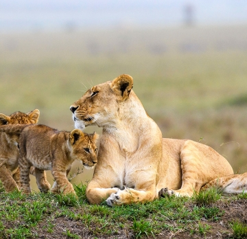 4 Days Kenya Safari Tours – Maasai mara National  Reserve Park