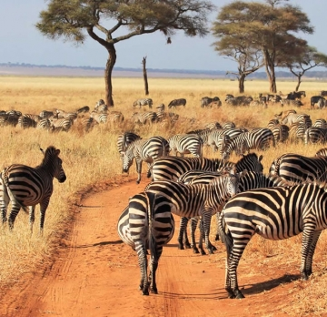 5 Days Tanzania Tour| Tarangire National Park Tour|Lake Manyara National Park Tour|Ngorongoro Crater National park Tour