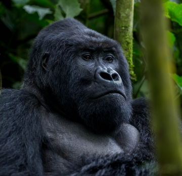 5 Days White Water Rafting and Gorilla Tracking In Bwindi Impenetrable Forest Park